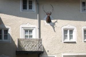 Tölz-Hirsch