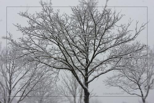 winter-jan-2015