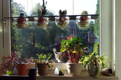 Fensterkatze-1