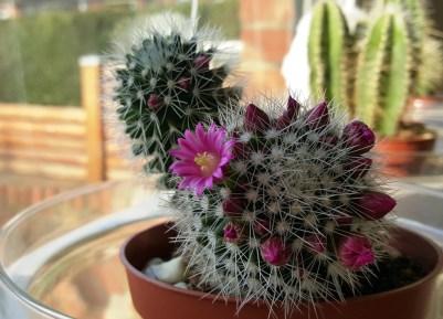 Blütenpracht drinnen