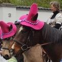 Jecke Pferde