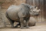 Mutter Nashorn